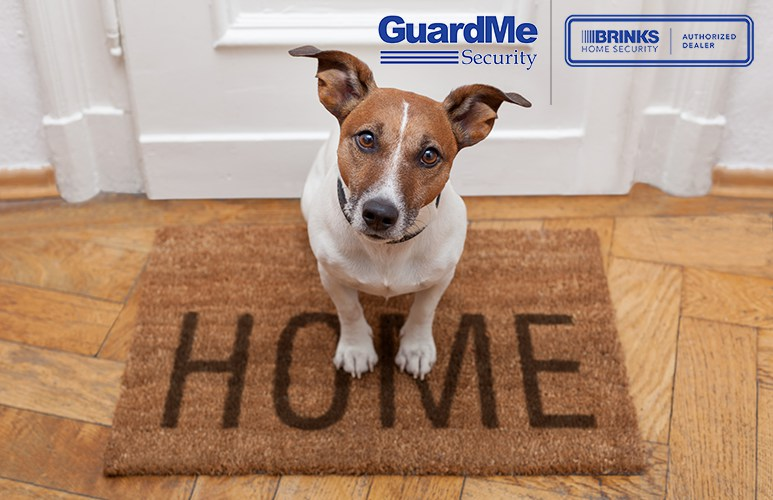 Love your dog buy still get home security